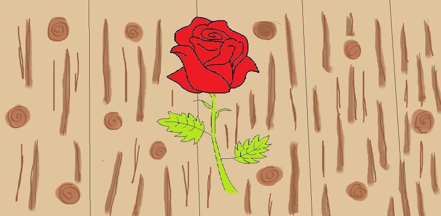 DÚ - růže