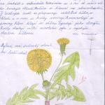 KLÁRA BLANAROVIČOVÁ