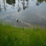 Zopakovali jsme si zvířata a rostliny ekosystému rybník.