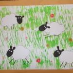 Ovce na louce 004