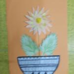 chryzantémy 003