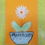 chryzantémy 008
