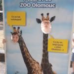 OLOMOUC2019 245