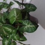 Příroda ornament (1)