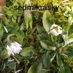 Hniličková_K_7278_IMG-20210227-133629